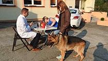 Szczepienie psów 2016
