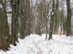 Park-zima,-styczen-2016.jpg