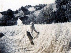 zniwa-1943,-widok-na-Grzegorzowice.jpg