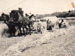 1937 r. prace w polu nad Odrą