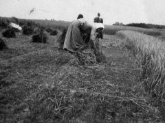 lipiec 1937 r. prace w polu
